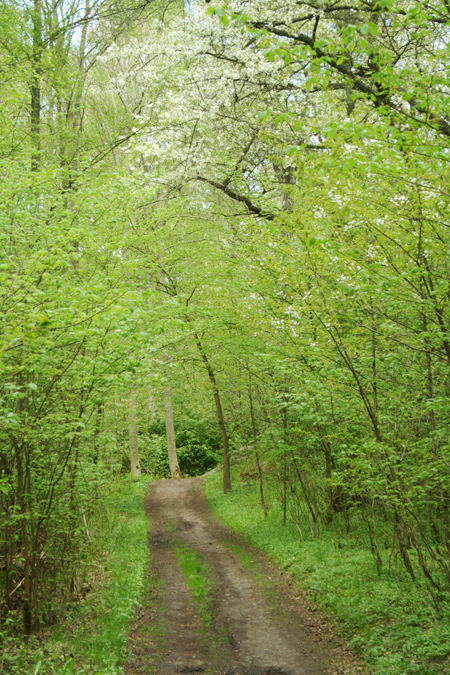 En skogsväg i Bromölla