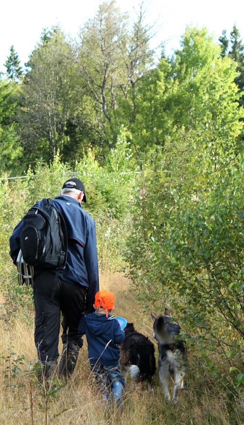 Med Janne, Walle och hundarna i skogen den 16 augusti