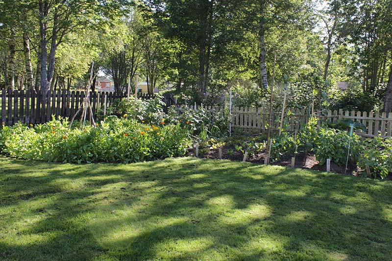 Skugga i min trädgård